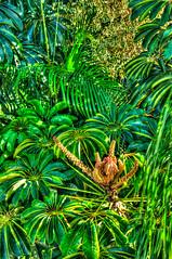 Plant Rebirth - HDR