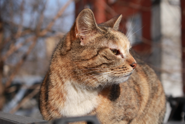 Мартовская кошка