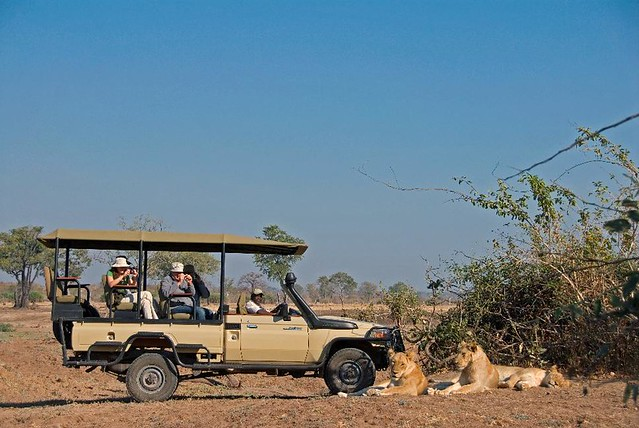 Header of African Safari