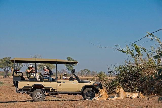 Header of African Safari