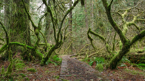 trees green nature leaves forest canon moss path mysterious pacificnorthwest canonef2470mmf28lusm canoneos5dmarkiii