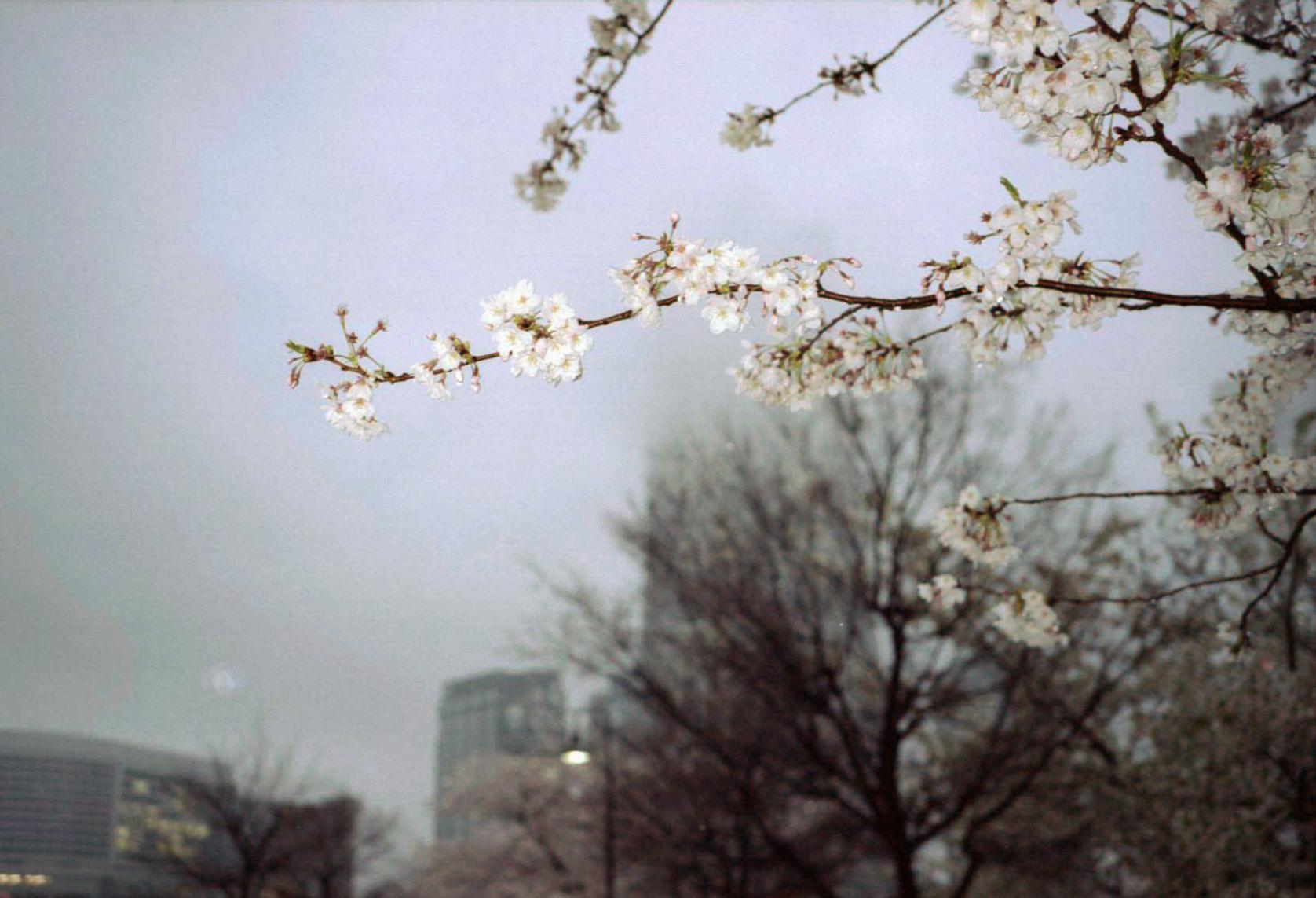 20140403 fujifilm KlasseS portra160 028