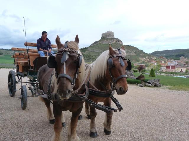 Coche de caballo en Bodegas Comenge (Curiel de Duero, Valladolid)