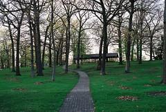 Brick path winding through the trees