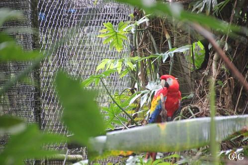 Zoo Karibikinsel Belize 19.11.2014 10
