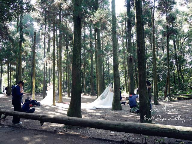 陽明山免費婚紗景點黑森林 (4)