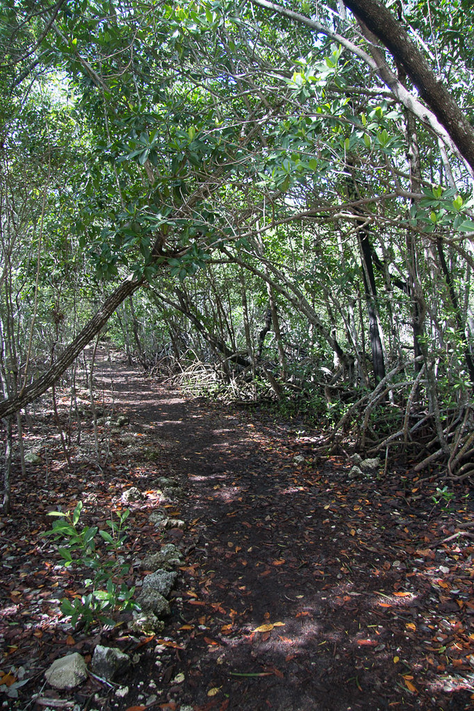 Trail at John Pennekamp Coral Reef State Park