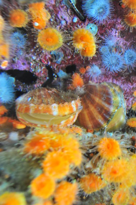 Seattle Aquarium 037 - Puget Sound exhibit