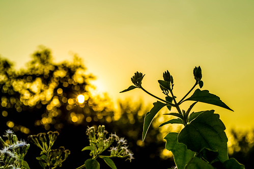 india silhouette closeup leaf nikon glow dof bokeh tamilnadu kumar kumaravel lr5 d3100 pudusseryeast