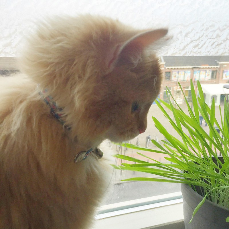Do not forget to eat your daily cat grass