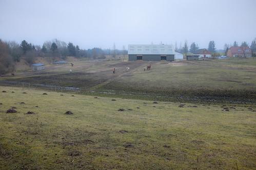 denmark danmark hest winterbreak pwd vinterferie holstebro centraldenmarkregion vestreplantage poulwernerdam
