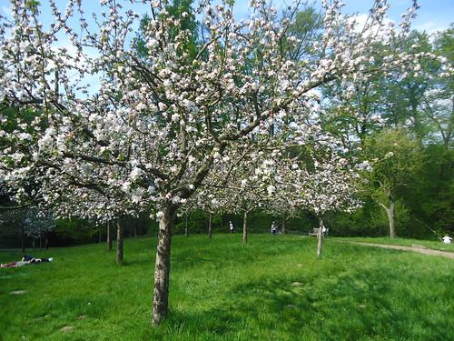 Parc Tournay Solvay printemps 2013 (1)
