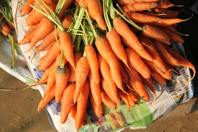Pile of carrots at the market
