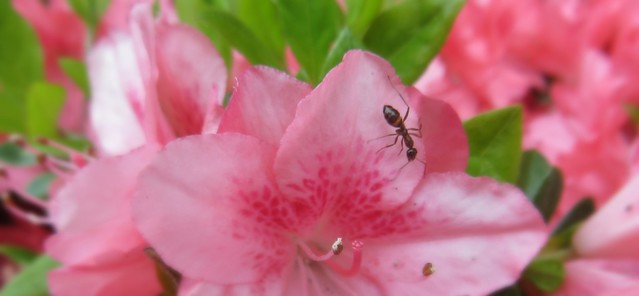 the ant and the flower