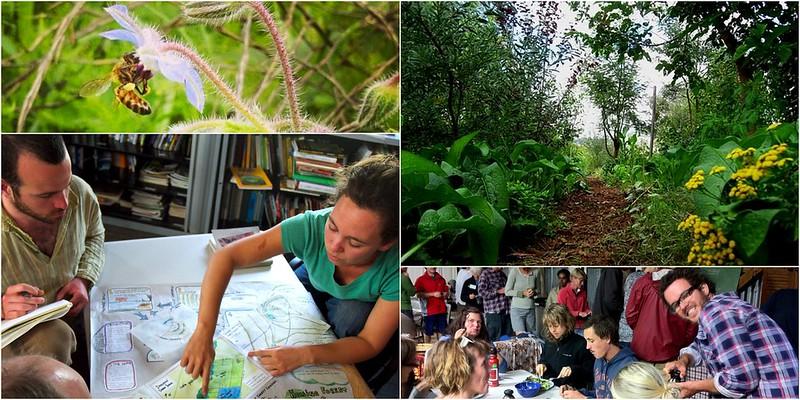 milkwood permaculture design course