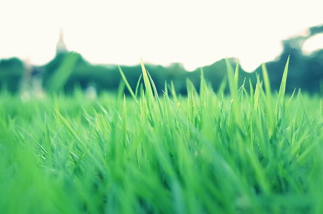 芝生のある場所で