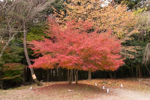 【写真】2012 紅葉 : 醍醐寺/2020-08-07/IMGP6845