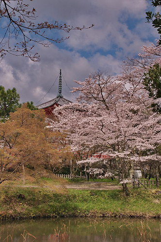 【写真】2013 桜 : 大覚寺/2020-09-15/IMGP9426