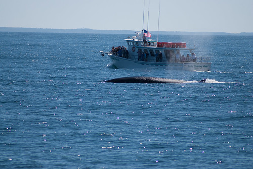 2013-05-24-whale-watch-0106