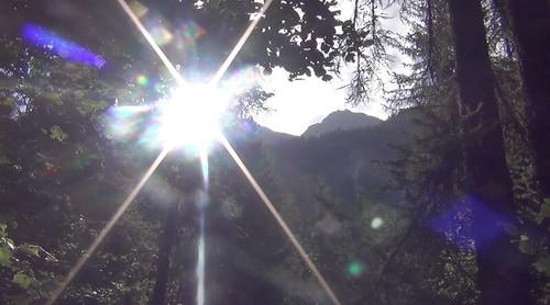 il verde dei boschi alpini