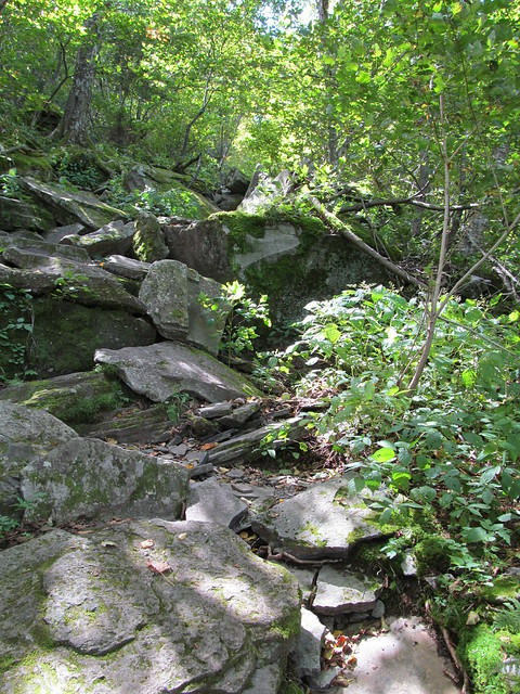 Typical section of trail