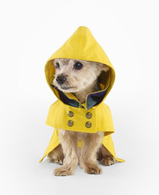 Ralph Lauren Dog Raincoat