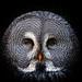 Great Grey Owl by shotreverseshot