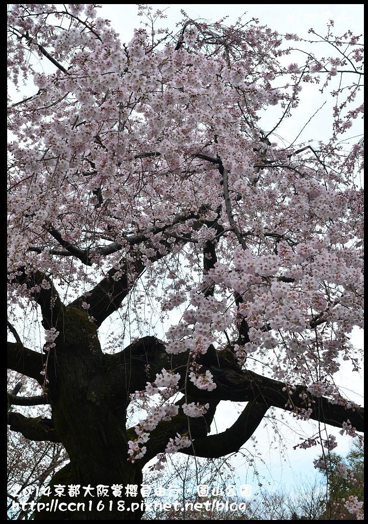 2014京都大阪賞櫻自由行.圓山公園DSC_9975