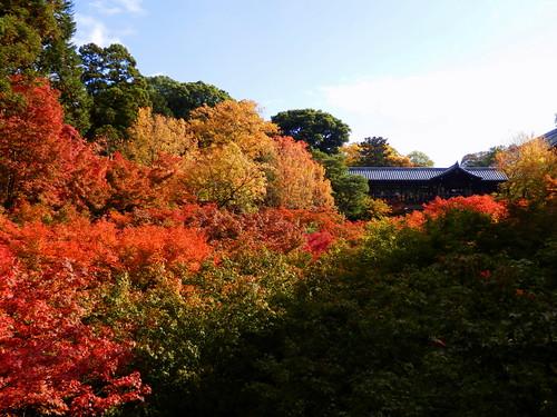 東福寺|Tofukuji Temple