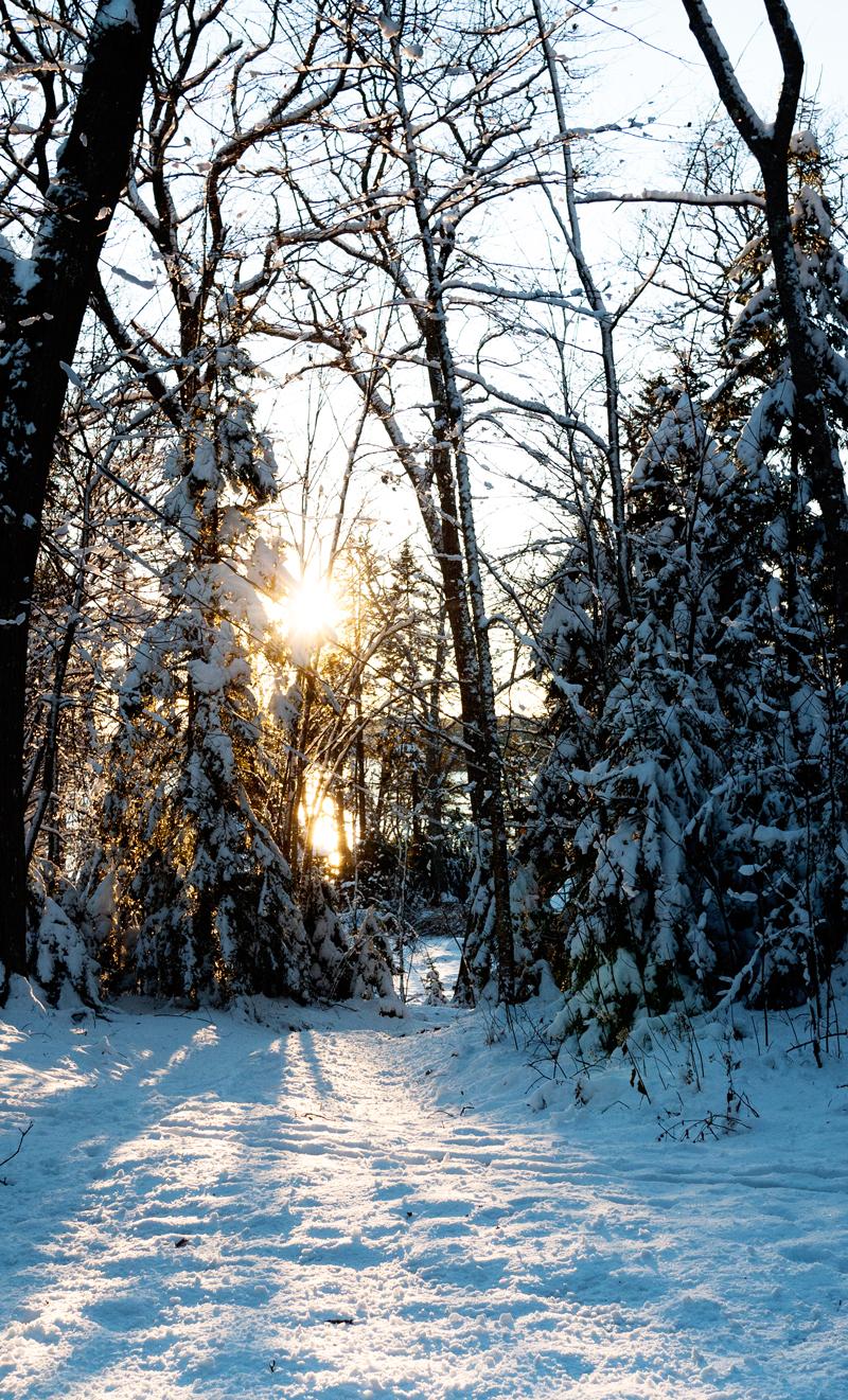 Sun shinning through snowy trees in Maine