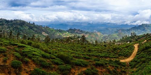 landscape nikon sigma srilanka haputale uvaprovince d7100