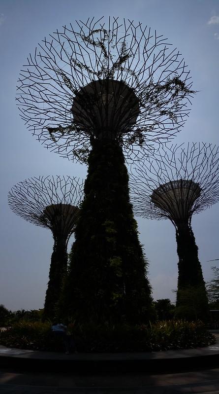 พาโนรามาแนวตั้ง ทำให้ถ่าย Super Tree ที่สูงมากๆ ได้ในระยะใกล้ๆ