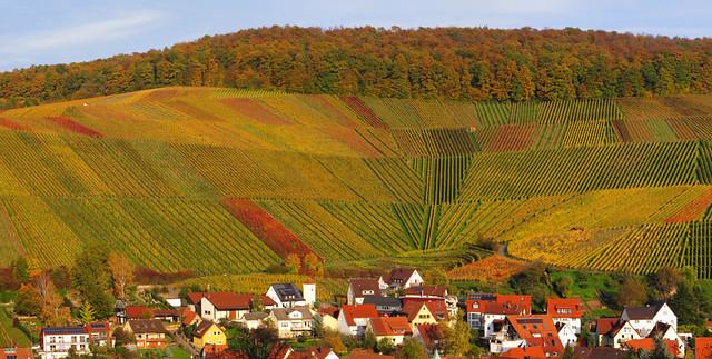 Vineyard Curve in Autumn
