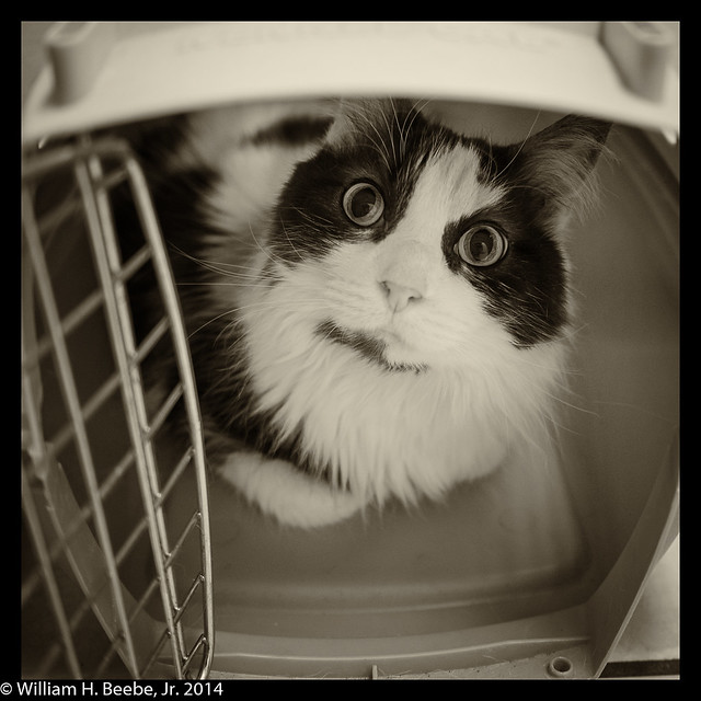 peeking up out of the carrier