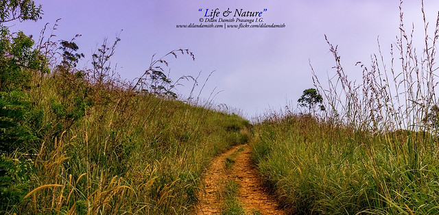 Dilan Damith Prasanga's - Life and Nature