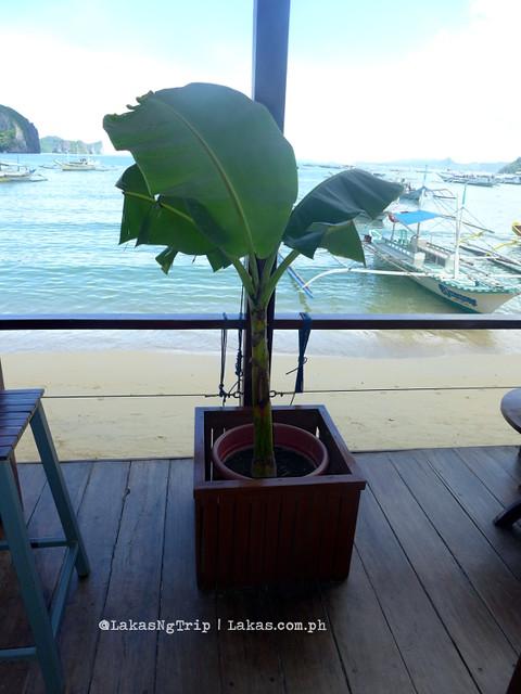 Potted banana tree at Mezzanine Restobar in El Nido, Palawan, Philippines