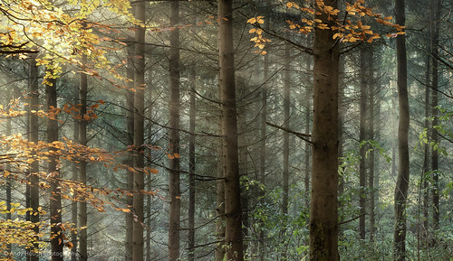 wood morning autumn trees england sunlight nature leaves woodland golden unitedkingdom sony sunrays autumnal wallingford a77 sonyalpha andyhough earthtrust slta77 littlewittenhamwood sonyzeissdt1680 andyhoughphotography