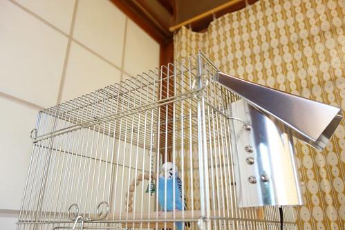Budgerigar_Ico_(2014_11_12)_1 青いセキセイインコが籠の中の止り木に止まっている写真。籠の向かって右側面にアルミ板で作られた囲いと屋根が付けられたヒーターが取り付けられている。