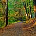 Autumn Sun Run by Jeffrey Friedkin