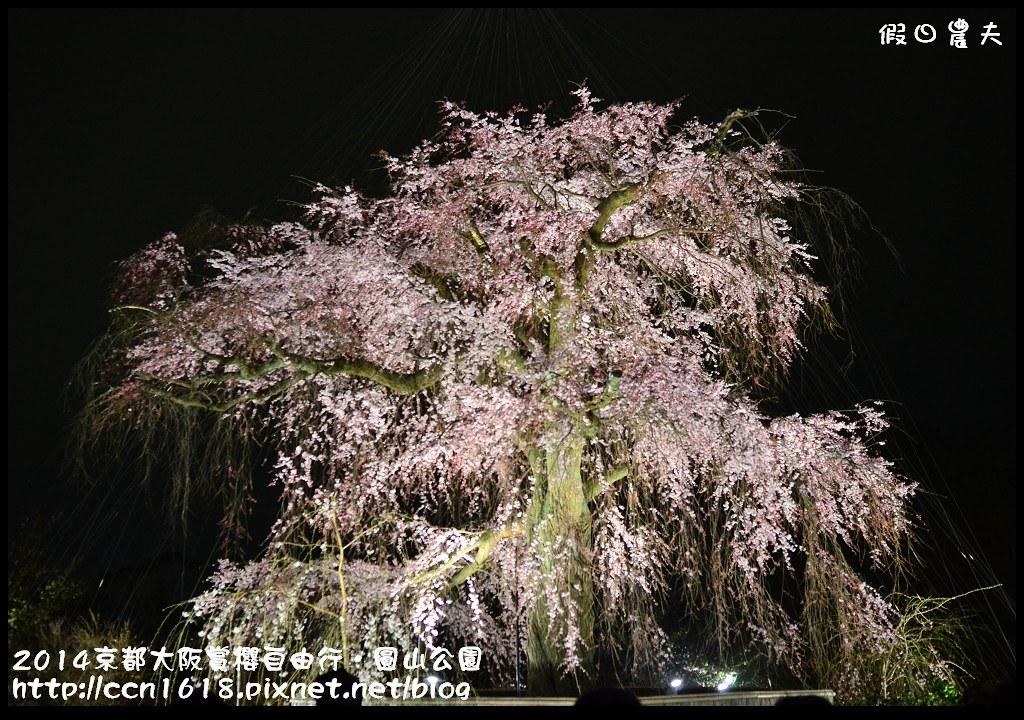 2014京都大阪賞櫻自由行.圓山公園DSC_0671