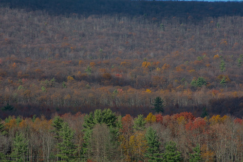 november mountain fall foliage autumn trees woods flurries sunshine clouds millmontpennsylvania unioncounty pennsylvania millmont bonniecoatesott