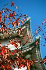 Nagoya Castle, Nagoya-jō, Nagoyajō, Nagoya, Aichi, Japan, 名古屋城, なごやじょう, 名城, めいじょう, 金鯱城, きんこじょう, きんしゃちじょう, 金城, きんじょう, 名古屋, なごやし, 愛知縣, 愛知県, あいちけん, 日本, にっぽん, にほん