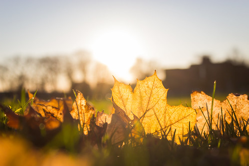 autumn sky sun sunlight canada fall grass leaves sunrise leaf novascotia ground halifax halifaxcommons