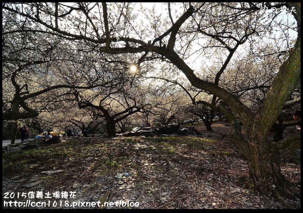 2015信義土場梅花DSC_9299