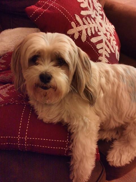 Abigail the Christmas Dog