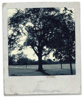 Tree polaroid