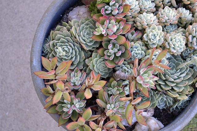 succulent(5)