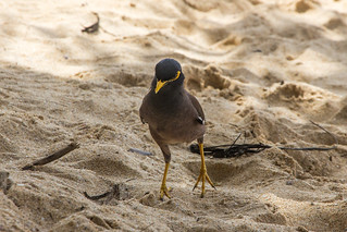 Image of Kata Yai Beach near Ban Karon. beach birds thailand phuket canon60d canonefs1585mmf3556isusm