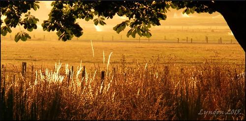 newzealand rural sunrise landscape outdoors fuji farm gimp scavengerhunt wairarapa greytown 2015 xs1 150hunt fujifilmxs1