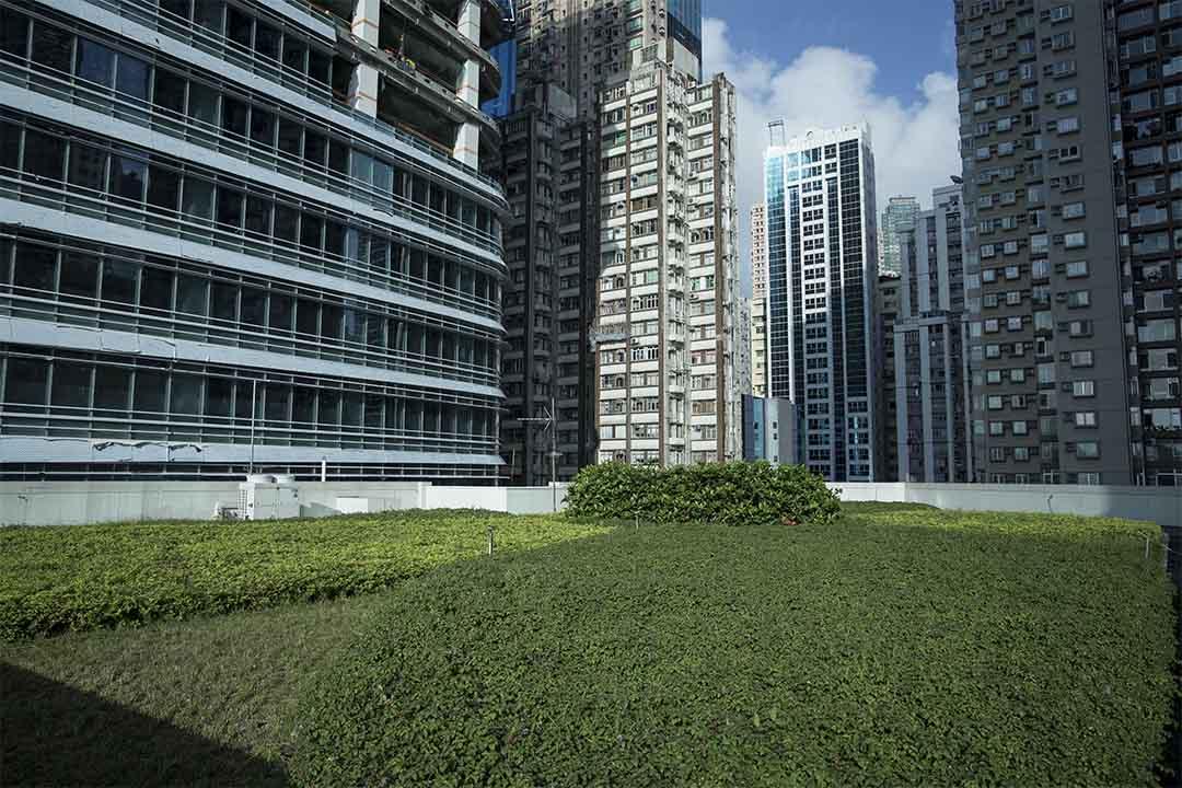 銅鑼灣社區中心的綠化天台。